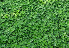 Herbe verte fraîche de source. Images libres de droits