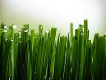 Herbe verte humide Photographie stock libre de droits