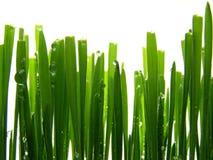 Herbe verte humide photographie stock