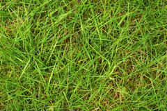 Herbe verte humide photo stock