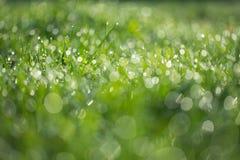 Herbe verte humide avec le backround de pelouse de rosée Photographie stock