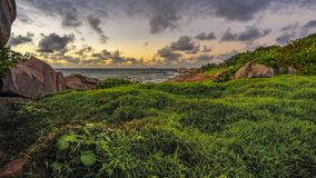 Herbe verte luxuriante dans le lever de soleil sur les Seychelles 1 images stock
