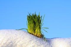Herbe verte, neige blanche et ciel bleu Photographie stock