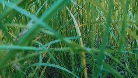 Herbe verte par la rivière banque de vidéos