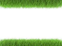 Herbe verte parallèle sur le fond blanc Photographie stock