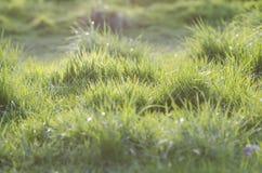 Herbe verte pendant le coucher du soleil photos libres de droits