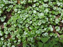 herbe verte pour la texture et la conception de fond photographie stock libre de droits
