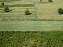 Herbe verte, route, champs et arbres Photographie stock libre de droits