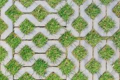 Herbe verte s'élevant entre les éléments de paver des tuiles comme fond ou texture Image stock