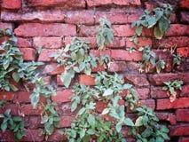 Herbe verte s'élevant sur le fond d'effet de texture de mur de briques Photographie stock libre de droits