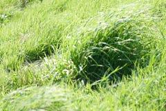 Herbe verte sauvage Image stock