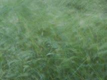 herbe verte soufflant dans le vent Image libre de droits