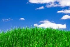 Herbe verte sous le ciel bleu Photos libres de droits