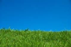 Herbe verte sous le ciel bleu Photos stock