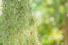 Herbe verte sous le ciel bleu Photographie stock