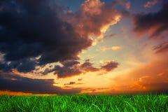 Herbe verte sous le ciel bleu-foncé et orange Photos libres de droits