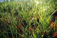 Herbe verte Sunlit Image libre de droits
