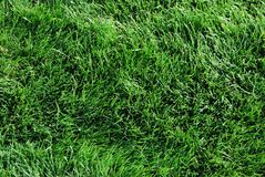 Herbe verte sur la pelouse Photo stock