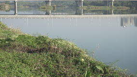 Herbe verte sur la rivière Image libre de droits