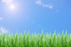 Herbe verte sur le ciel bleu nuageux Photographie stock