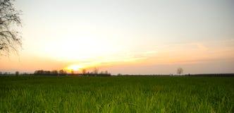 Herbe verte sur le coucher du soleil Photo stock