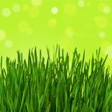 Herbe verte sur le fond abstrait Images libres de droits