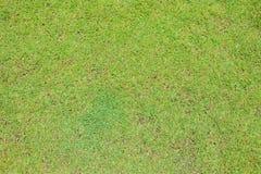 Herbe verte sur le fond au sol de texture Images libres de droits