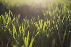 Herbe verte sur le fond vert Photos libres de droits