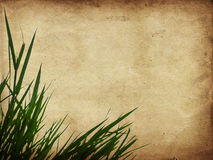 Herbe verte sur le papier Image libre de droits