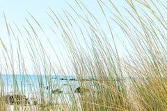 Herbe verte sur un fond d'océan bleu et de ciel bleu Photographie stock