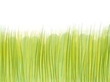 Herbe verte tirée par la main sur le fond blanc Photographie stock