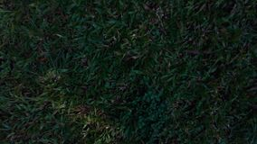 Herbe verte, tirant de l'air mavic de bourdon d'avions pro, avance d'appareil-photo, débarquant banque de vidéos