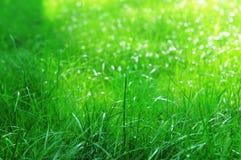 Herbe verte un jour ensoleillé Image libre de droits