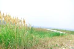 Herbe verte un jour nuageux image stock