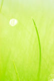 Herbe verte verte Photographie stock
