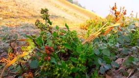 Herbe verte Vineet Dreamstime photographie stock libre de droits
