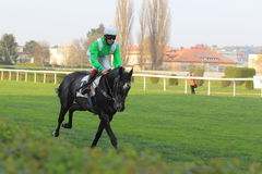 Herbebois i hästkapplöpning i Prague Arkivbilder