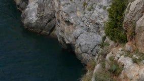 Herbergier die zeemeeuw op de rotsen ingaan stock video