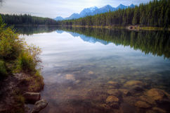 Herbert lake reflections Stock Image