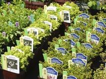 Herbes à vendre Image libre de droits