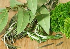 Herbes épicées Photo libre de droits