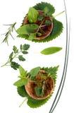Herbes 003 Photos libres de droits