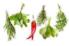 Herbes. photos libres de droits