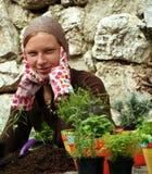 Herbes Image stock