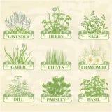 Herbes Photos libres de droits