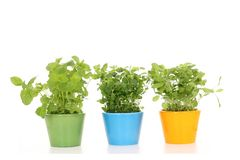 Herbes images stock