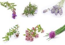 Herbes Photographie stock libre de droits