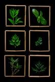 herbes Image libre de droits