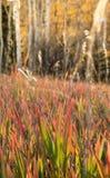 herbes alpines de montagne vert rouge image stock