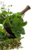 Herbes aromatiques dans un mortier photographie stock